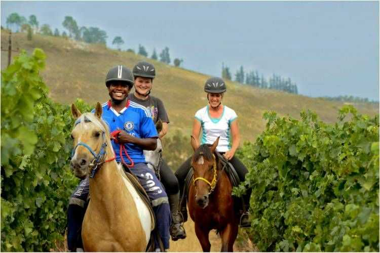Cape Winelands Riding
